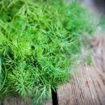Dill: Benefits, medicinal properties, contraindications and remedies