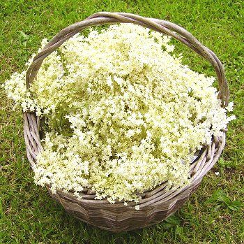 elderflower for skin