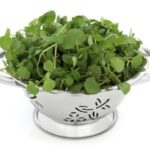 Watercress benefits: Natural ally against anemia and fatigue