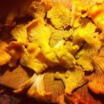 Benefits and properties of chanterelles
