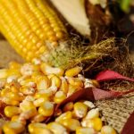 GMO foods: What they are and how they differ from other foods